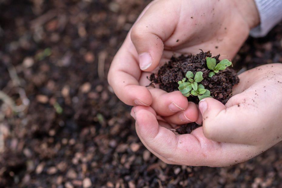 manos niña con tierra y planta